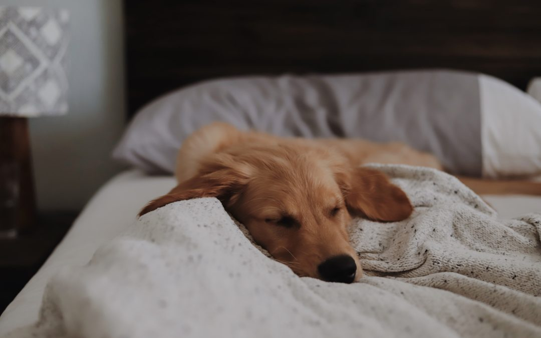Simple Tips for Sleeping Productively